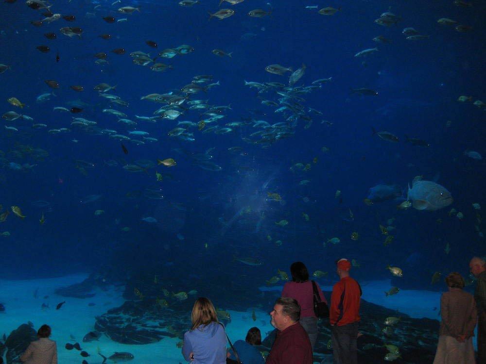 Georgia Aquarium Fish Tank