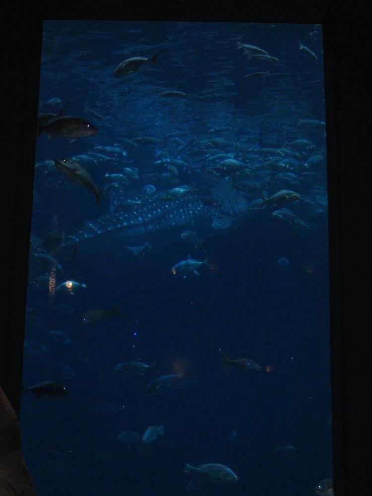 Georgia Aquarium Tank
