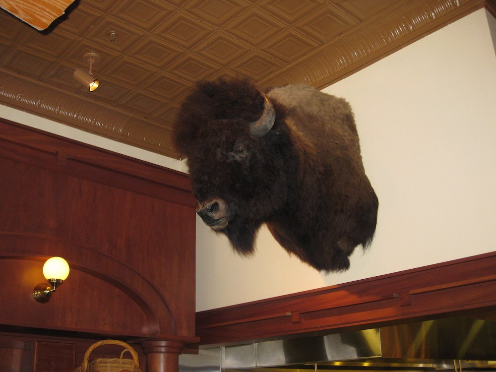 Bison Head at Ted's Montana Grill Bar